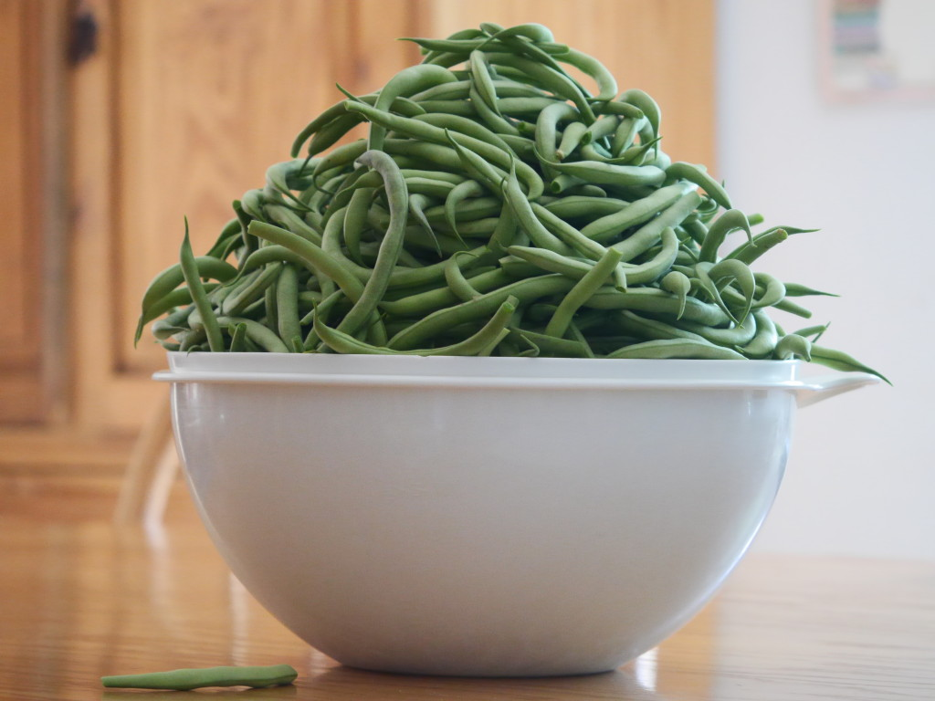 We were blessed with a lot of green beans...